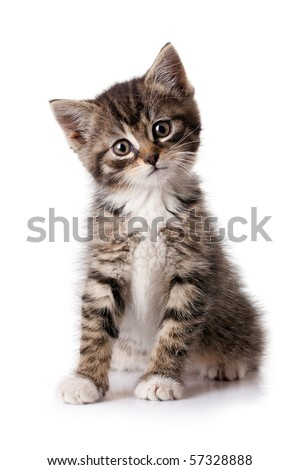 Little kitten isolated on white background. Tabby cat baby #57328888