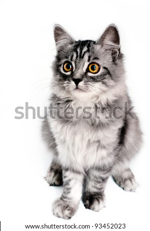 Little kitten. Look through my portfolio to find more images of the same series