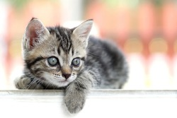 Little kitten looking to the right