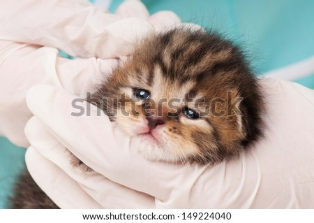 Little kitten on a treating at the veterinary clinic close-up