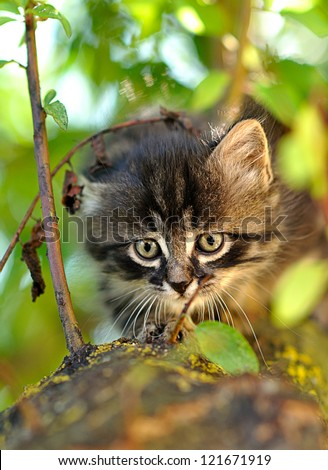 little kitten on a tree