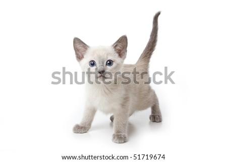 Little kitten on white background