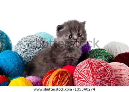 little kitten on white background. persian kitten