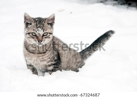 little kitten on white snow