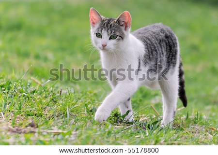 little kitten playing on the grass Cat's child