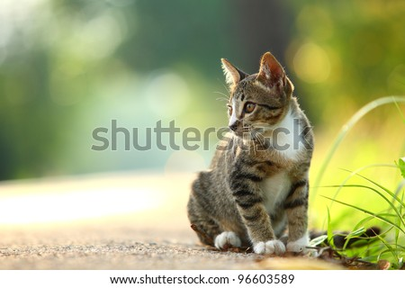 little kitten playing on the grass roadside in morning - stock photo