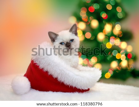 Little kitten sitting in Santa's hat against  fir tree with Christmas lights