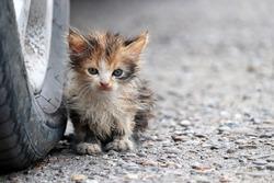 Little kitten sitting on a street near the car wheel. Portrait of stray dirty cat outdoors
