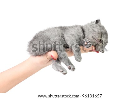 Little kitten sleeping in the hand at white background