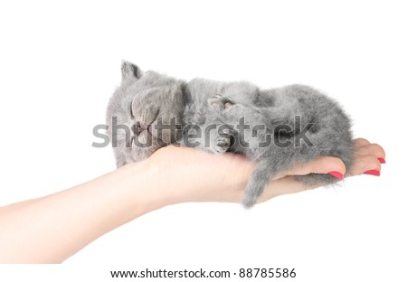 Little kitten sleeping in the hands at white background