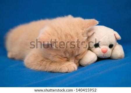Little kitten sleeping on blue blanket with toy cat