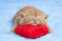 Little kitten sleeping on the red heart-shaped pillow