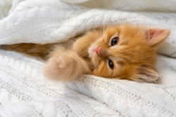 Little kitten sleeps on a coverlet. Small cat sleeps sweetly as a small bed. Sleeping cat in home on a blur background. Cats rest after eating.