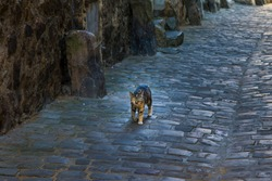 Little kitten walking along the narrow streets of Le Mans