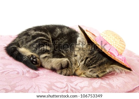 Little kitten with straw hat sleeping on a pink pillow