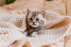 Little kitten wrapped in a beige knitted scarf. Shop of goods for cats. ... Protection. A warm scarf. Gift for the new year.