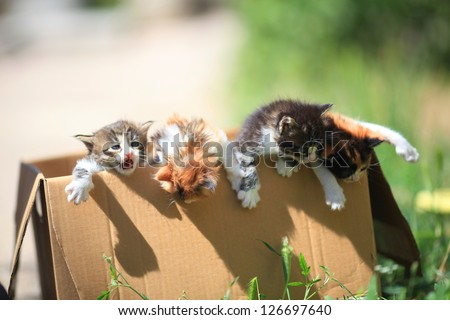 little kittens get out of a cardboard box
