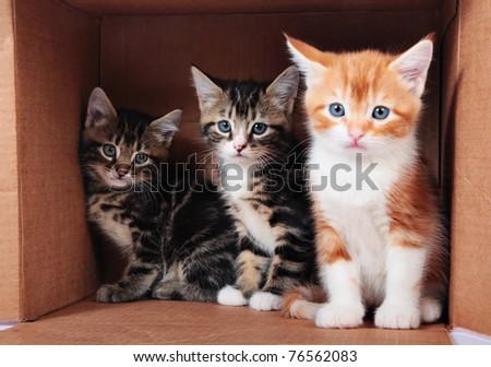 Little kittens in a cardboard box
