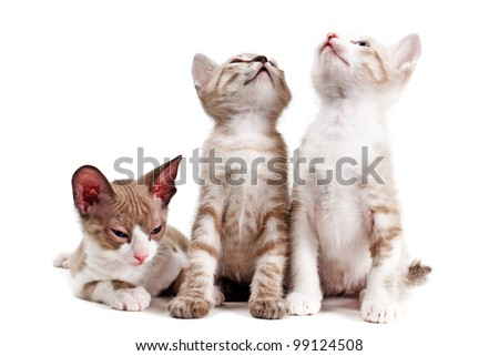 Little kittens isolated on the white background #99124508