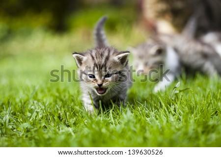 Little kitty cat on grass