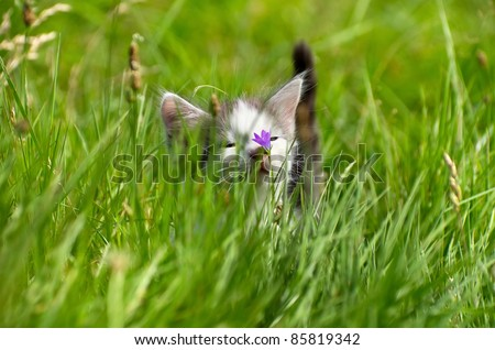 Little kitty for a walk in the tall grass.