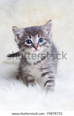little kitty hunts