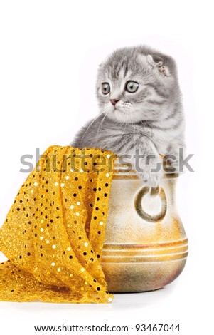 Little kitty in a bowl isolated on white