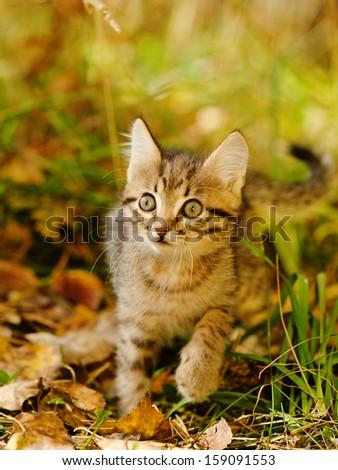 little kitty in the autumn grass