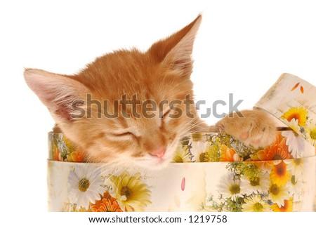 Little Kitty lie