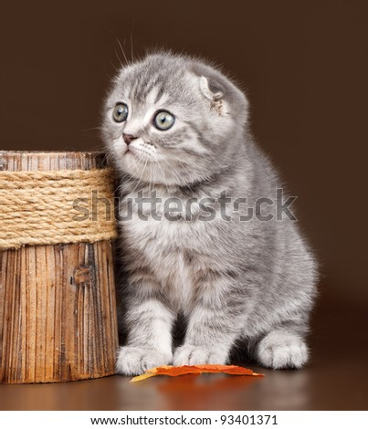 Little kitty on brown background