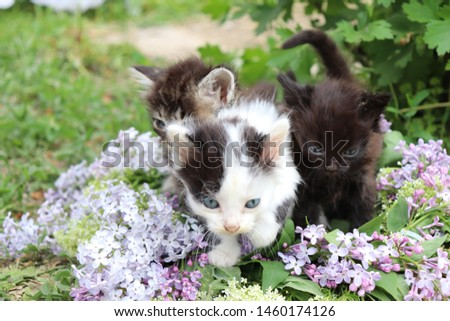 little kitty on the flowers #1460174126