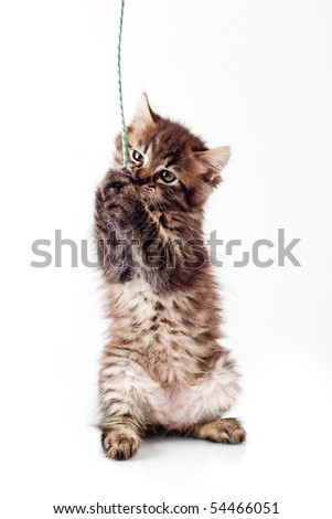 Little kitty playing with rope isolated over white