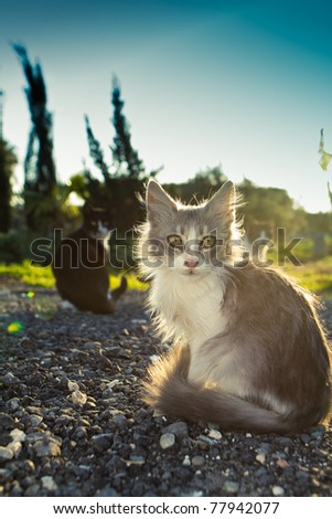 Little kitty with green sad eyes and blac cat on the background sunset