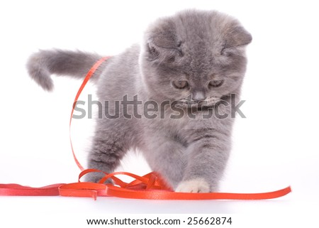 little kitty with red ribbon on a white background