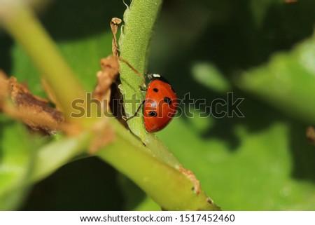 Little ladybug on leaf Picture