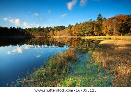 little lake in autumn forest, Roden, Drenthe, Netherlands Stock foto ©
