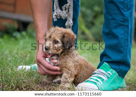 Little, lovely, fluffy, cute brown puppy playing outdoors with owner, obediently sitting. Happy dog in the park or garden on green background. Concept of discovering the world, everything is new #1173115660