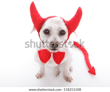 Little lucifer dog with devil horns and tail