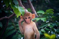 little monkey smile face in the bush