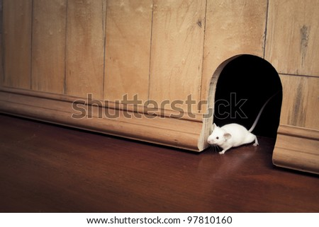 little mouse coming out of it's hole