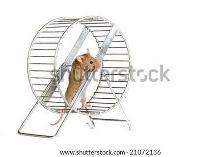 Little mouse in a wheel.