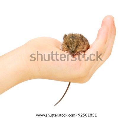 Little mouse on palm isolated on white background
