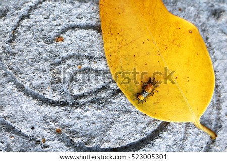 Little orange caterpillar on a yellow leaf. #523005301