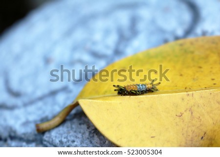 Little orange caterpillar on a yellow leaf. #523005304