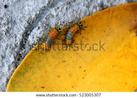 Little orange caterpillar on a yellow leaf. #523005307