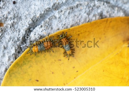 Little orange caterpillar on a yellow leaf. #523005310