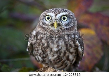 Little Owl Day