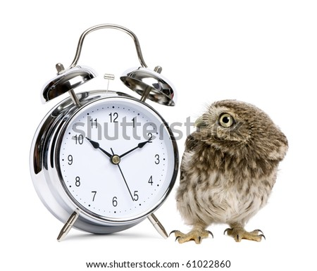 Little Owl, 50 days old, Athene noctua, in front of a white background with alarm clock