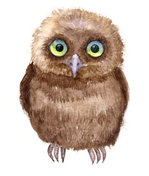 Little owl drawing by watercolor, artistic painting bird, cute fluffy nestling, hand drawn illustration