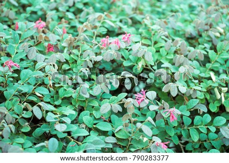 Free background of little pink flowers blooming bush photos avopix little pink flower bush 790283377 mightylinksfo